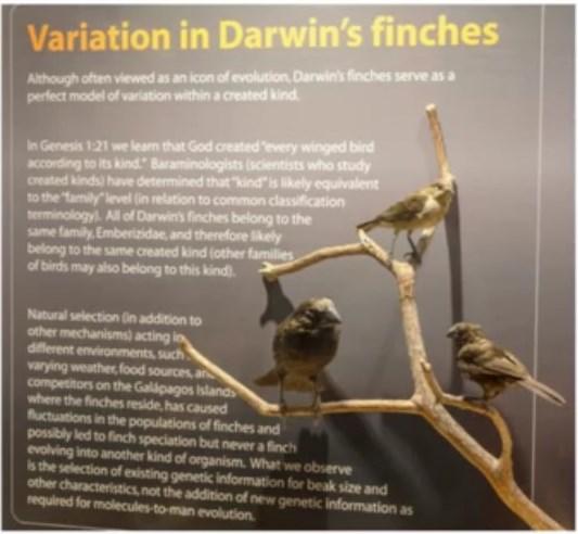 a Darwin's finches