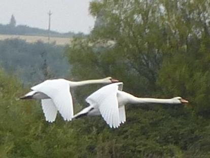 swan 11 9 14 3