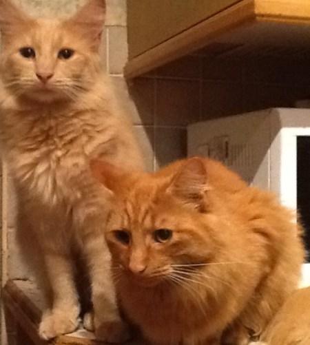 Heather's cats