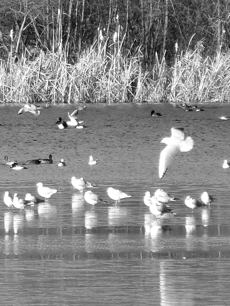birds, on the water