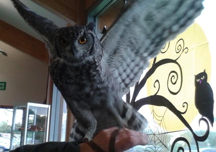 owl-balancing-act