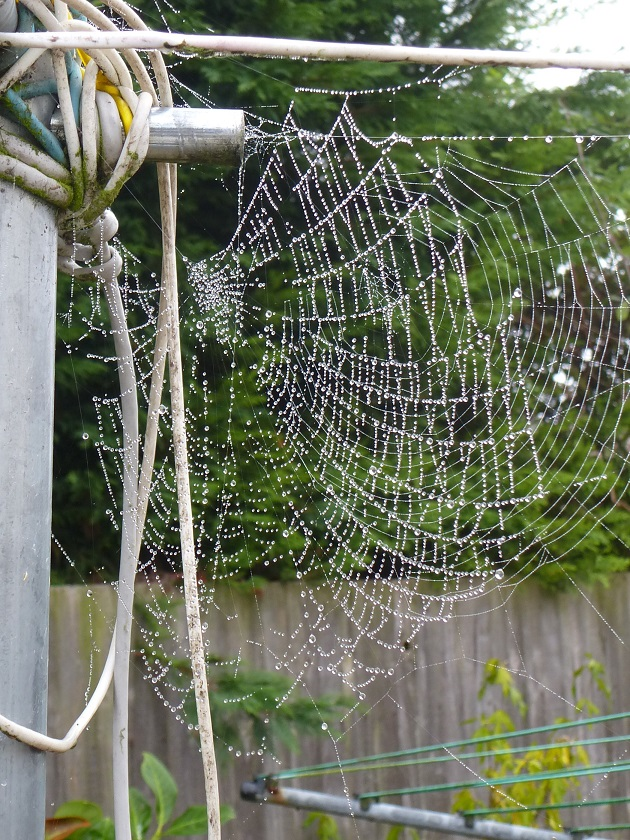 dew-on-the-web